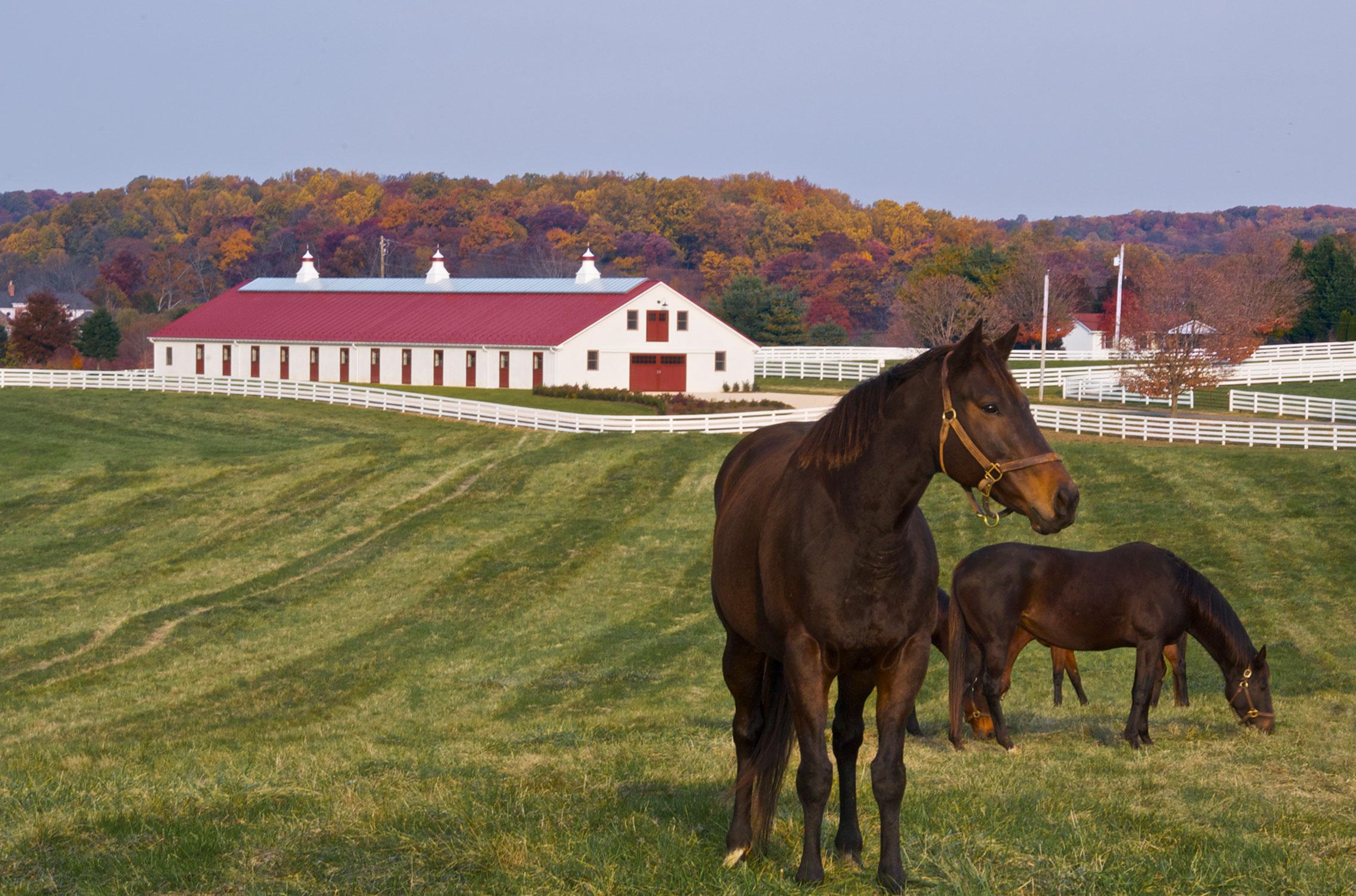 Sagamore farm archives blackburn architects p c for Horse farm